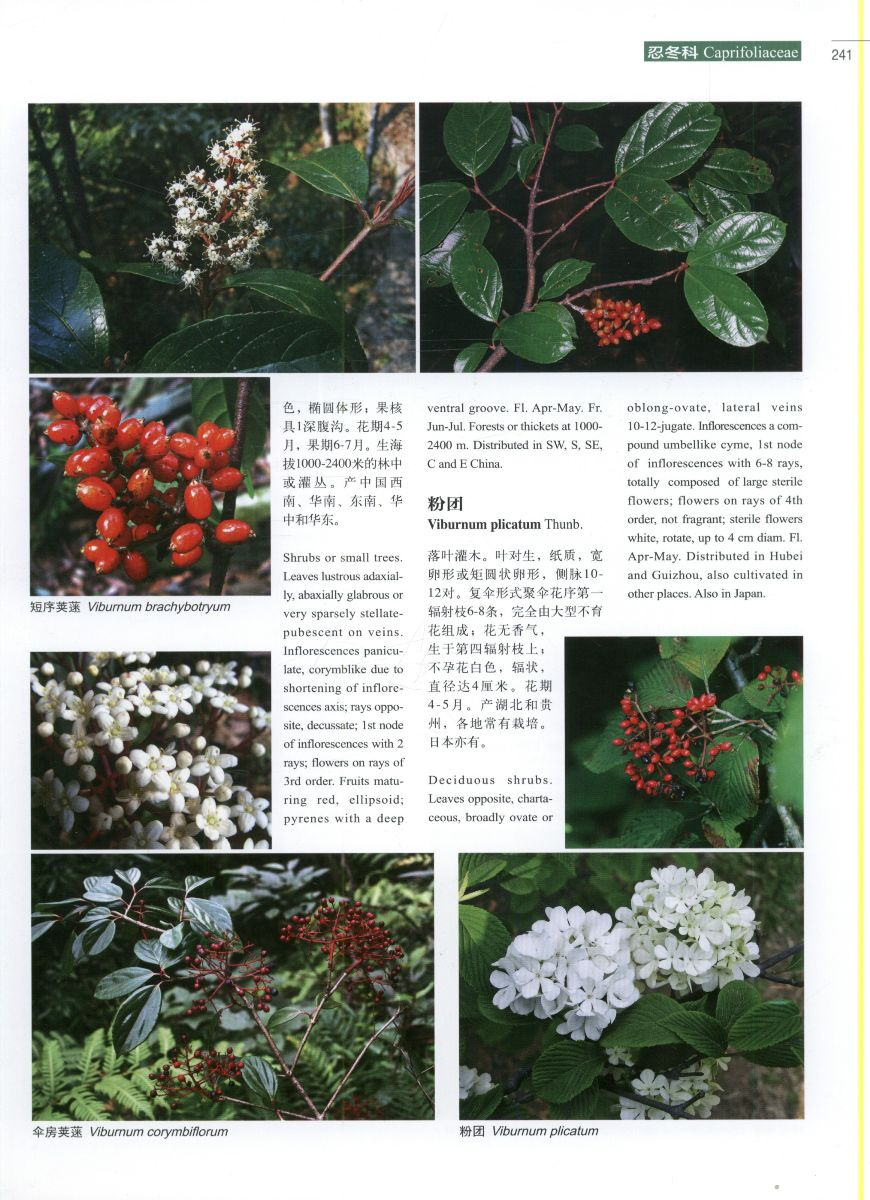 Higher plants of China in Colour: volume VII angiosperms scrophu