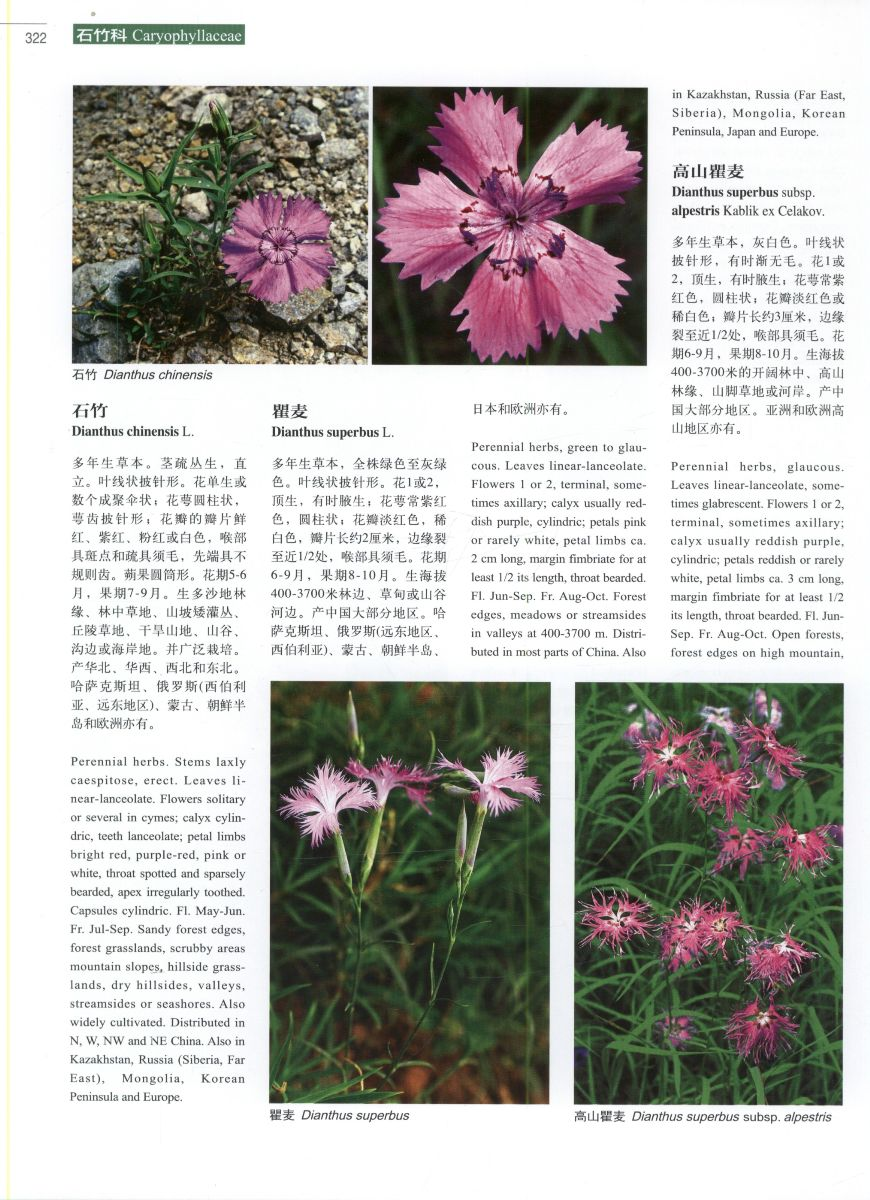 Higher plants of China in colour: Volume III Angiosperms: Casuar