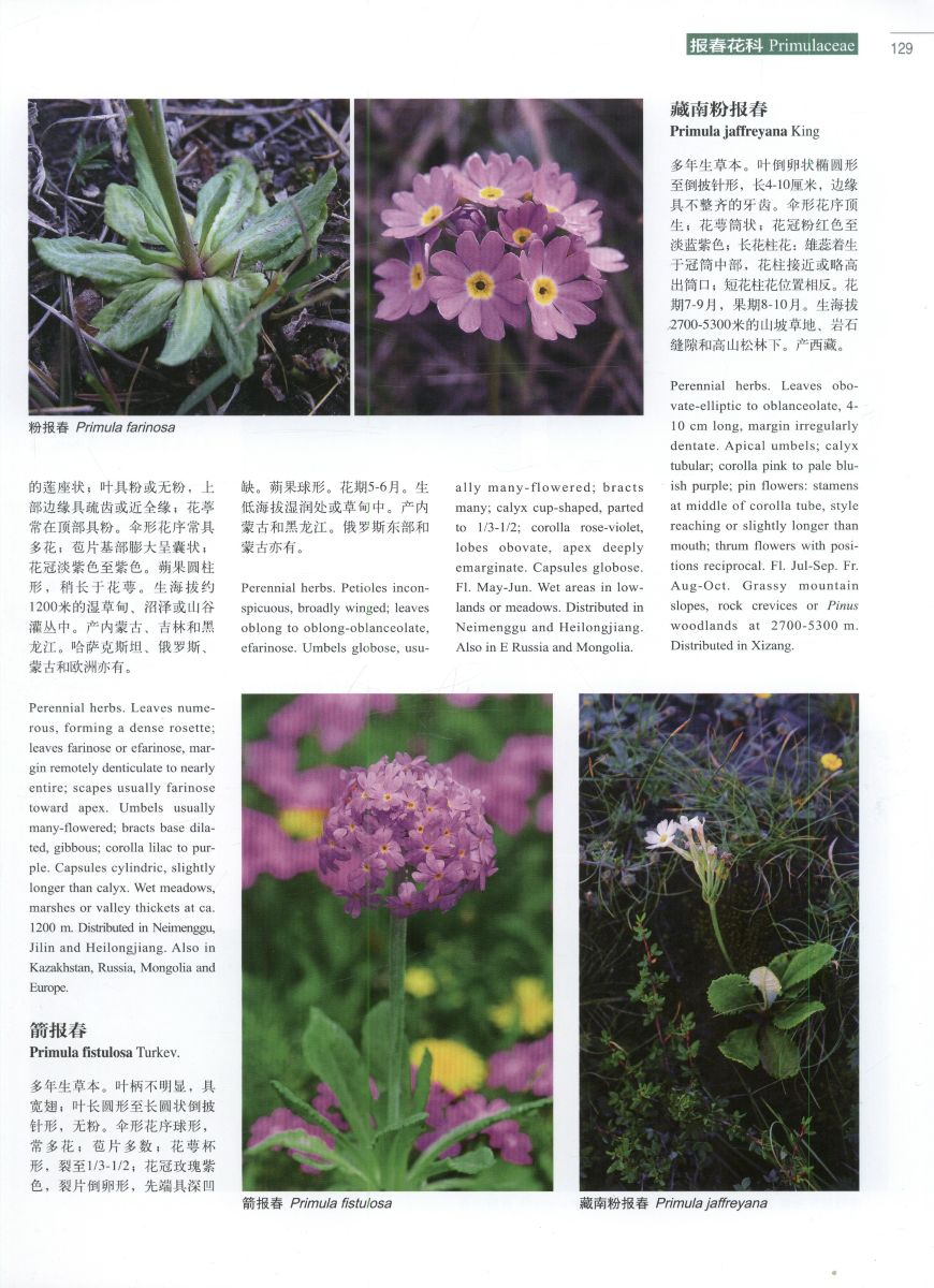 Higher plants of China in colour: Volume VI Angiosperms: Diapens