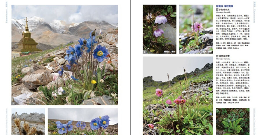 New book: WILD FLOWERS OF QINGHAI-TIBET PLATEAU - $179.90